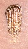 E303 Bronze